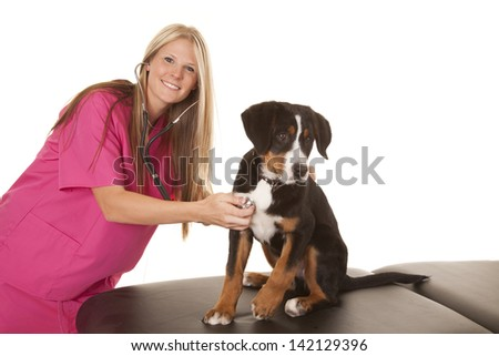A woman veterinarian working with a puppy checking to make sure he is healthy