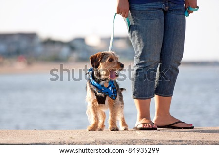 A woman walks a cute borkie beagle yorkie mix puppy at the beach. - stock photo