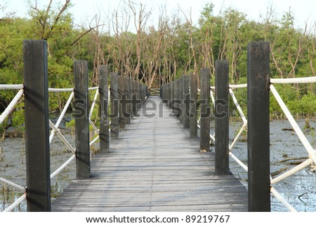 A wooden bridge go to the mangrove forest - stock photo