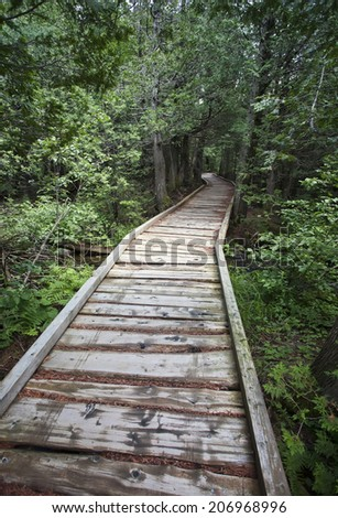 A wooden hiking path leading into dense green forest. - stock photo