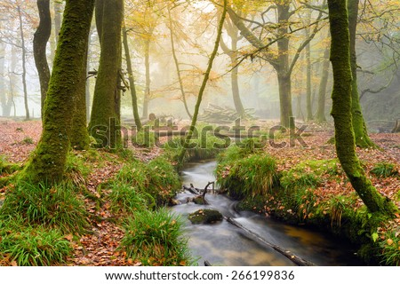 A woodland stream at Golitha Falls a wooded valley on the southern edge of Bodmin Moor in Cornwall - stock photo