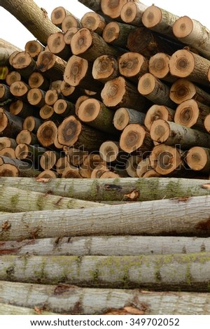 A woodpile with many logs of wood ready for transformation