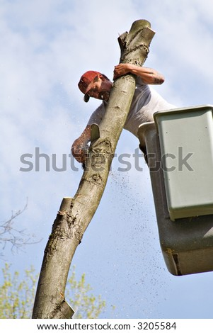 A worker in a bucket lift cutting down tree with chainsaw. - stock photo