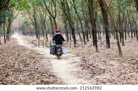 a worker moving on moto at the path in rubber forest, Dong Nai province, Vietnam. Dong Nai has many rubber tree forest.  - stock photo