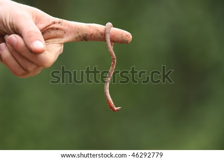 A worm from the garden - stock photo