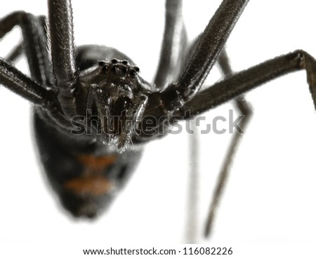 A worms eye view of a black widow stuck to fly paper.  I got her off the paper and let her go in a storm drain. Beautiful but creepy. - stock photo