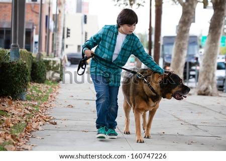 A 10 year old boy walking a big Mastiff dog - stock photo