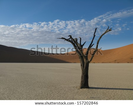 A 600 year old dead Acacia tree stands alone in a sun baked clay pan, Sossuvlei Namibia  - stock photo