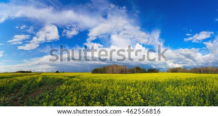 A yellow blooming canola field and blue sky with clouds.