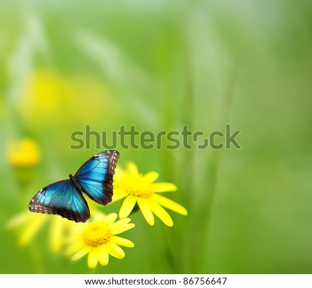 a yellow camomile is in a garden . Selective focus - stock photo