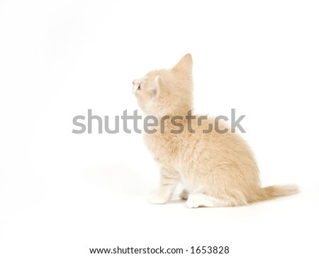 A yellow cat looks up and to the left on white background