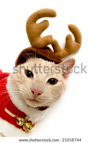 A yellow cat with a Christmas costume - stock photo