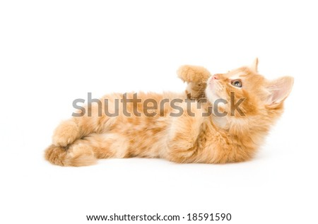 A yellow kitten laying down on a white background and looking up