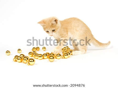 A yellow kitten plays with Christmas decorations and ornaments on a white background - stock photo