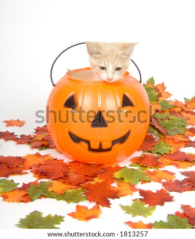 A yellow kitten sits inside a plastic pumpkin with fall leaves (artificial)