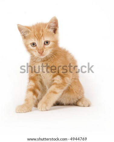 A yellow kitten wakes up from a nap ready to play on white background
