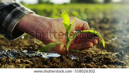 a young beautiful hand watering a plant in a romantic natural and magical atmosphere and extreme slow motion