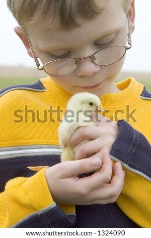 A young boy holds one of his baby chicks that he is raising on a farm in Illinois (09) - stock photo