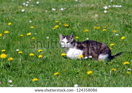 A young cat lying on a flower meadow. - stock photo