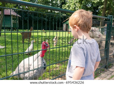 A young caucasian boy looking at a turkey from behind a fence at a children's farm