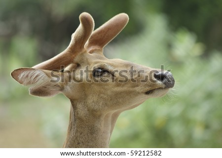A young deer with blur background - stock photo