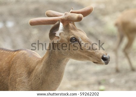 A young deer with blur background
