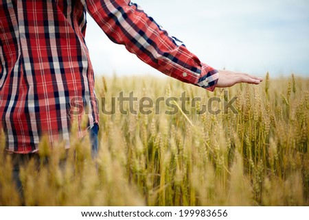 A young farmer's hand above a wheat field with selective focus - stock photo