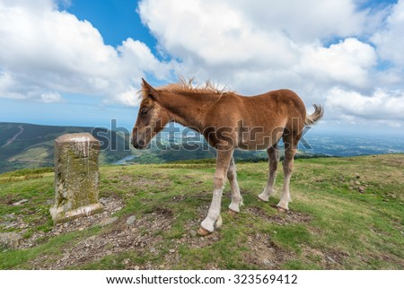 A young foal standing next to a carved rock  in the mountain with a blue cloudy sky - stock photo