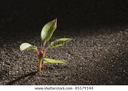 A young green plant growing out of brown soil. - stock photo