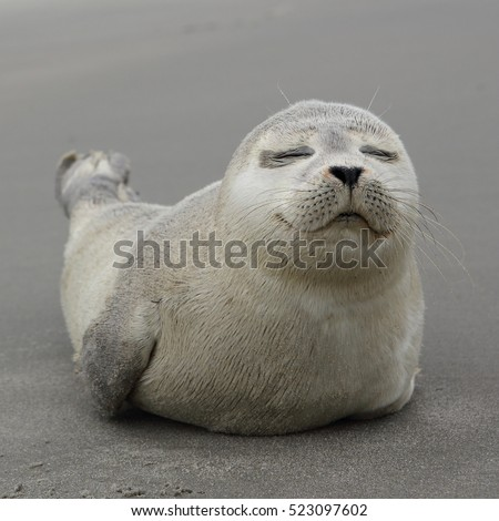 Seals Stock Images RoyaltyFree Images Vectors Shutterstock