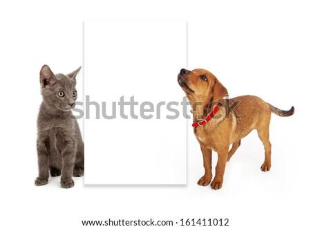 A young kitten and puppy sitting to the side of a blank white sign. Add your own advertising message to the board. - stock photo
