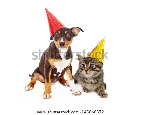 A young mixed breed puppy and a kitten wearing red and yellow birthday party hats sitting together against a white background - stock photo