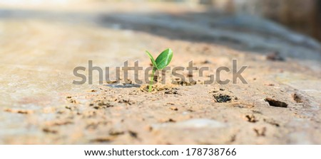 a young plant growing on the rock - stock photo