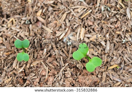a young plant or tree grown from a seed - stock photo