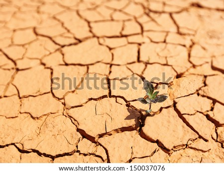 A young plant sapling sprouting from a crack in a desolate barren desert floor.  - stock photo