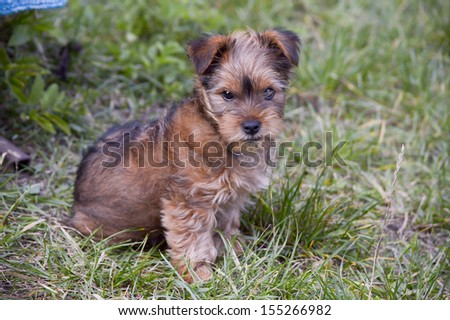 A young puppy - stock photo