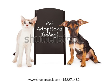 A young puppy and a kitten standing on the sides of a black chalkboard A-frame sign with the words Pet Adoptions Today written in chalk font - stock photo