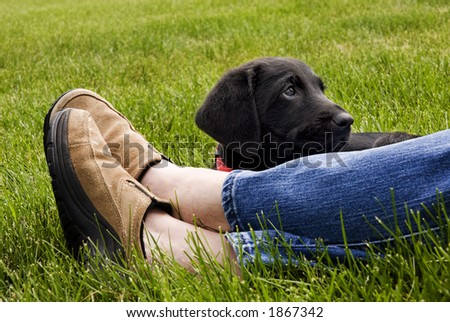 A young puppy looks lovingly at his friend while resting in the green grass. - stock photo