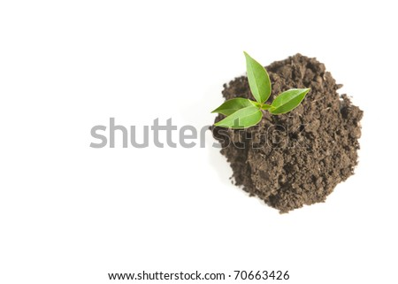 A Young Sprout in Dirt Isolated on White