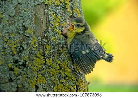 a young tit sitting on a tree trunk and chirping - stock photo