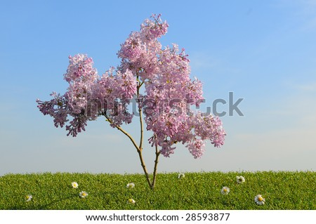 A young tree rapidly expanding
