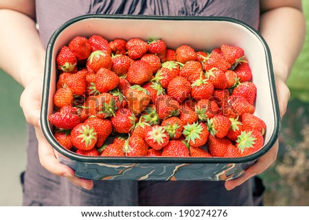 A young woman holding a large bowl of fresh strawberries. Gorgeous slender young brunette woman with bowl of fresh strawberries. - stock photo