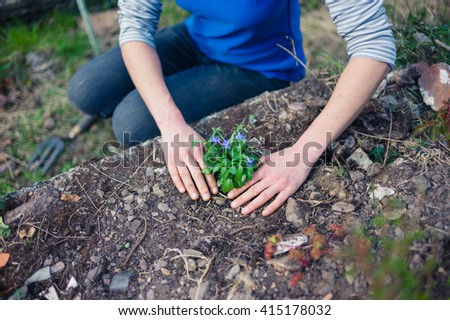 A young woman is planting a lobelia in her garden