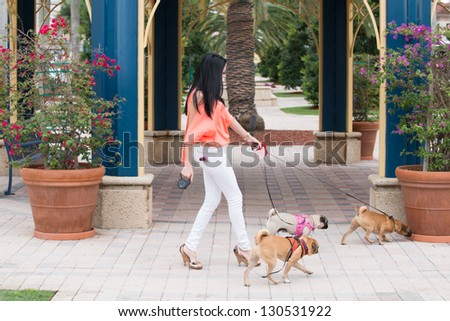A young woman walking three dogs of pug breed.  A young woman walking three dogs of pug breed. - stock photo