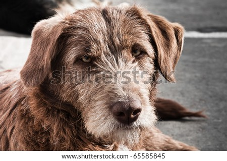Abandoned brown dog on the street - stock photo