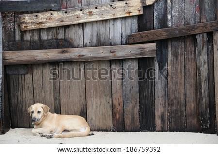 Abandoned dog lying on the ground - stock photo