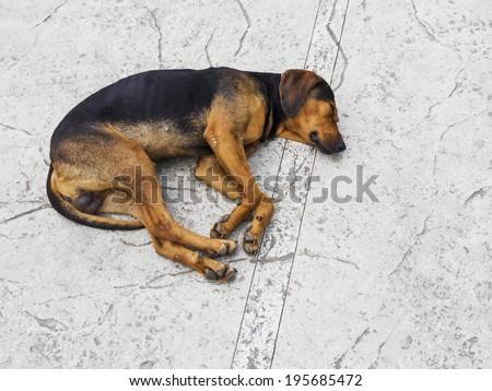 Abandoned dog sleeping on street - stock photo