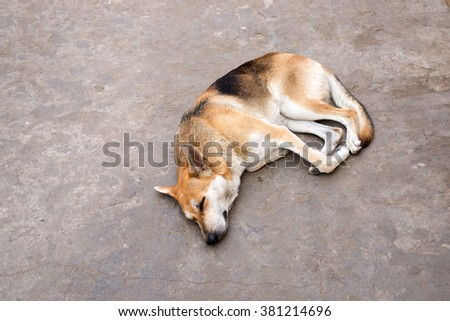 Abandoned dog sleeping on street - stock photo