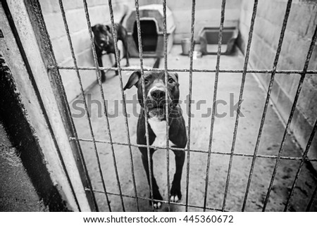 Abandoned dogs in the kennel, animals - stock photo