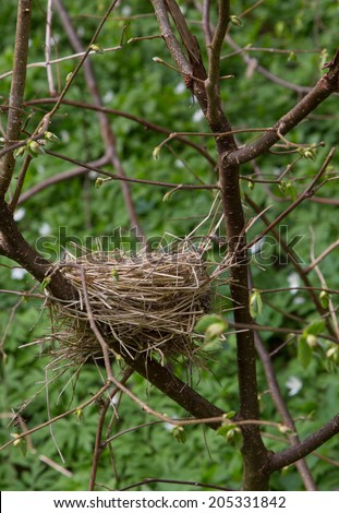 Abandoned empty nest in early spring - stock photo